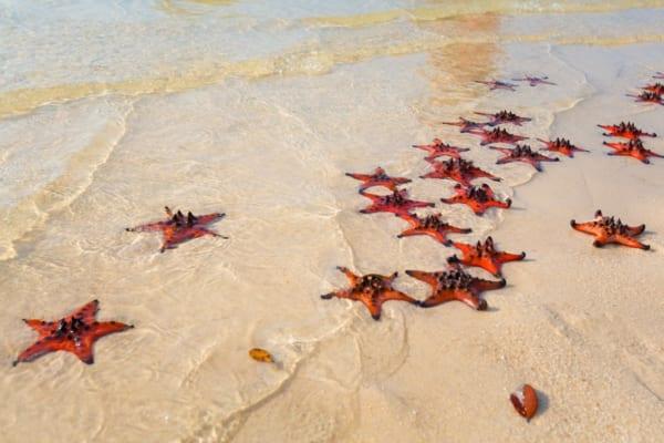 Tour Phú Quốc Câu Cá & Lặn Ngắm San Hô 1 Ngày